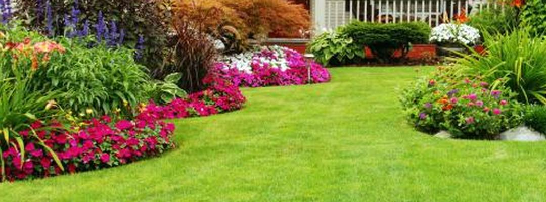Landscaping Pebbles Sunshine Coast : Green spot lawn landscaping